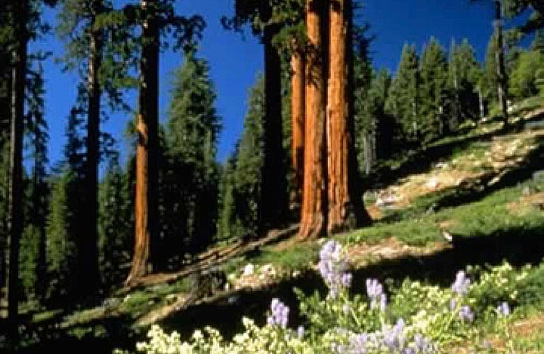 Planning for Water Resources in the Southern Sierra of California