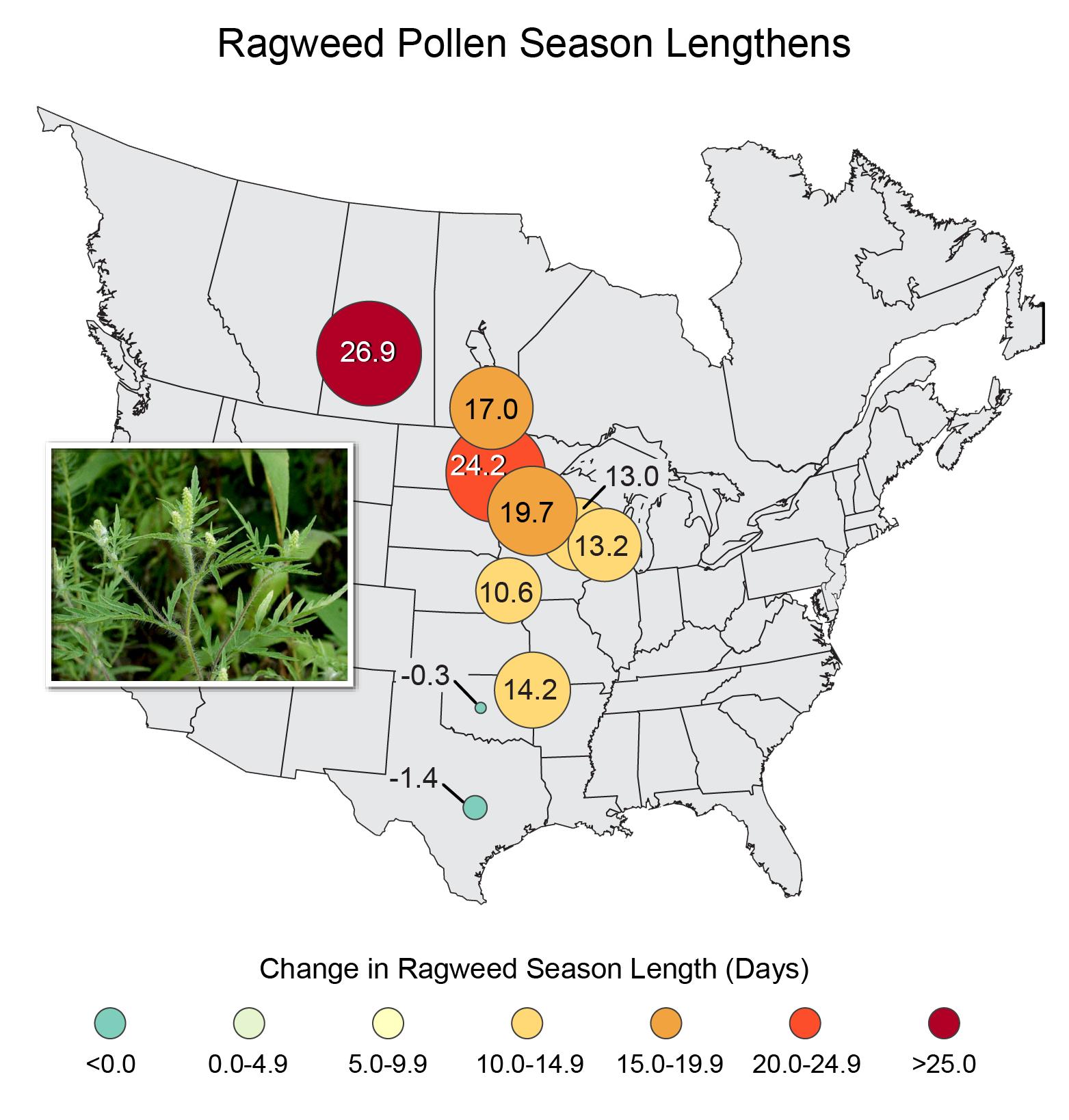 health ragweed pollen season V4 copy