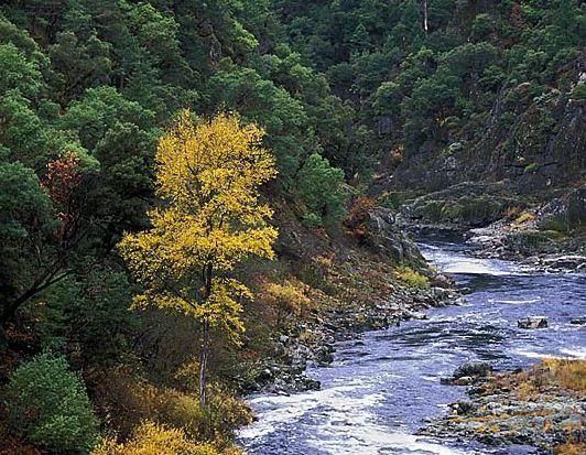 rogue graves creek clip